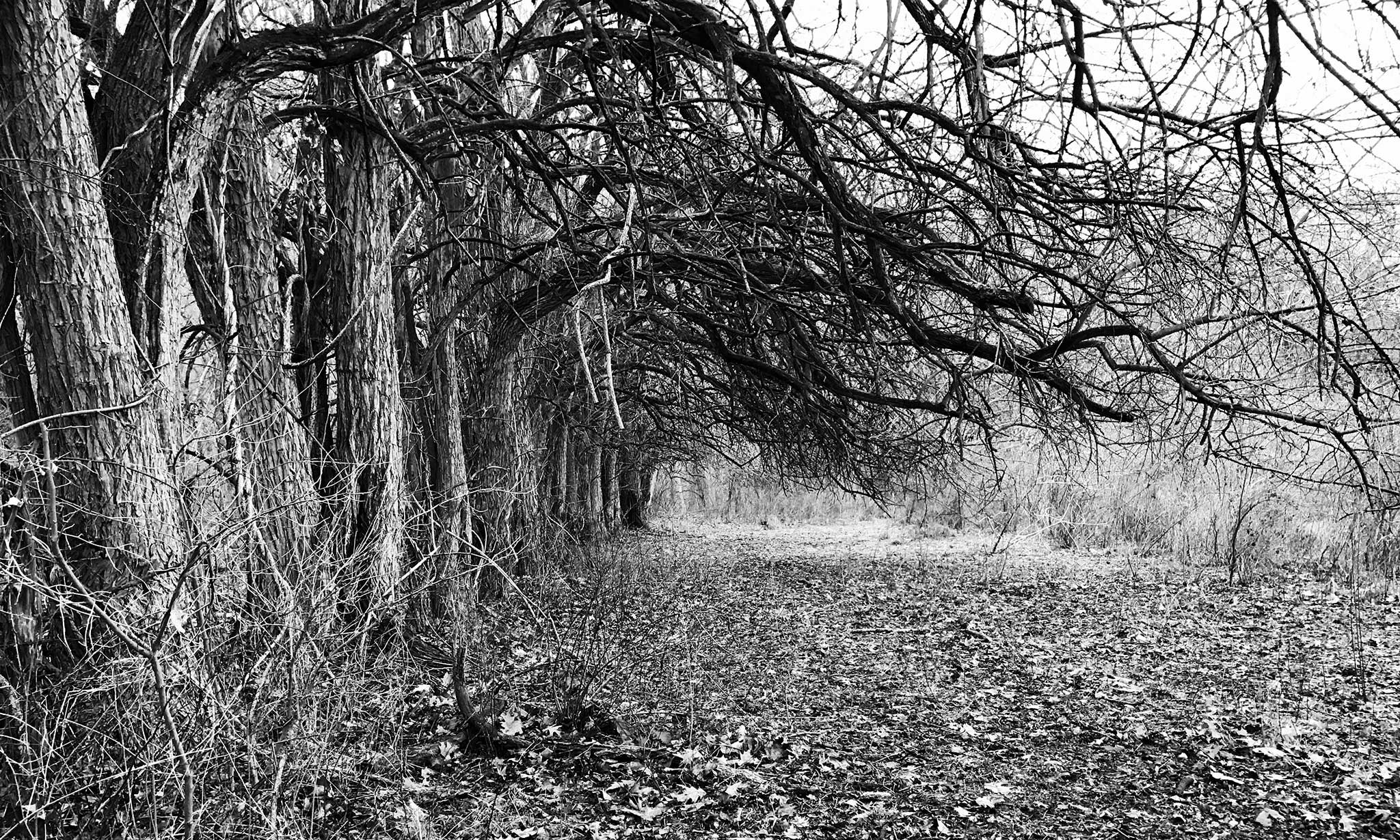 Black and white photo of trees lining the edge of an old field.